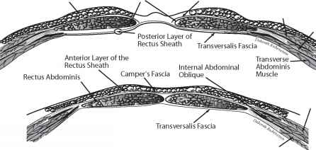 Investing Layer Deep Cervical Fascia