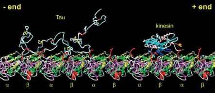 cephalexin ibuprofen