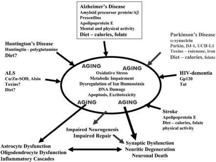 Alzheimer Disease Biological Pathways