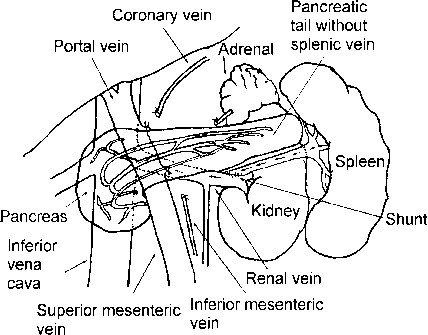 Coronary Vein Pancreas