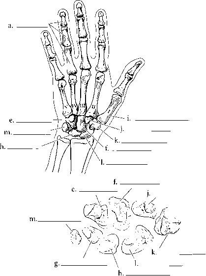 The Hand Anterior View
