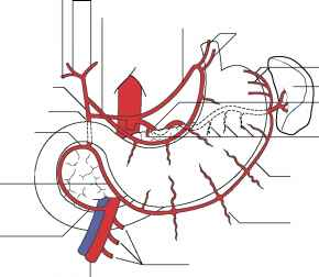 Middle Colic Artery