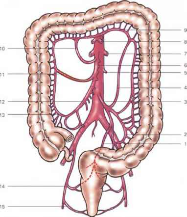 Partial Colectomy Blood Supply