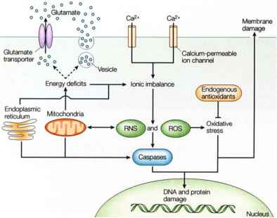 Mechanisms Ischemic Cell Injury