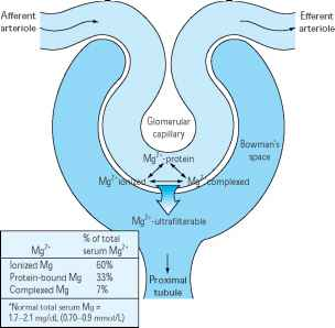 Glomerulus Filtration Physiology