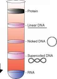 Cscl Etbr Gradient Supercoiled Dna