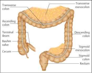 1 7 anatomy of the colon