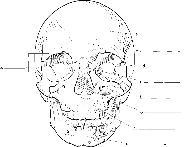 Chapter Three Skeletal System