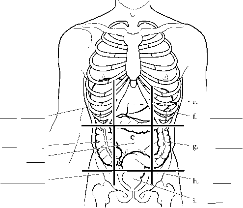 Anatomical Planes Of The Body - Spinal Cord - RR School Of Nursing