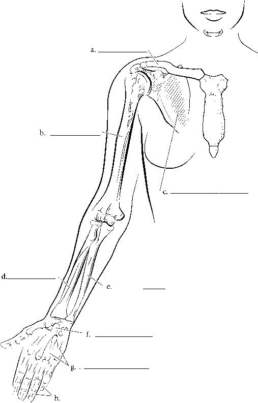 medical - spinal cord