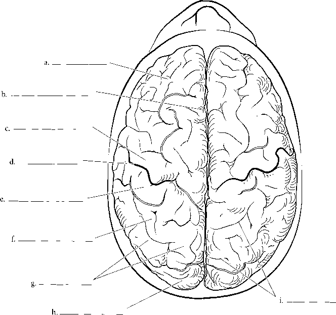 Sulcus Gyrus Labeling