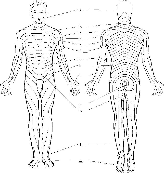 dermatomes - spinal cord