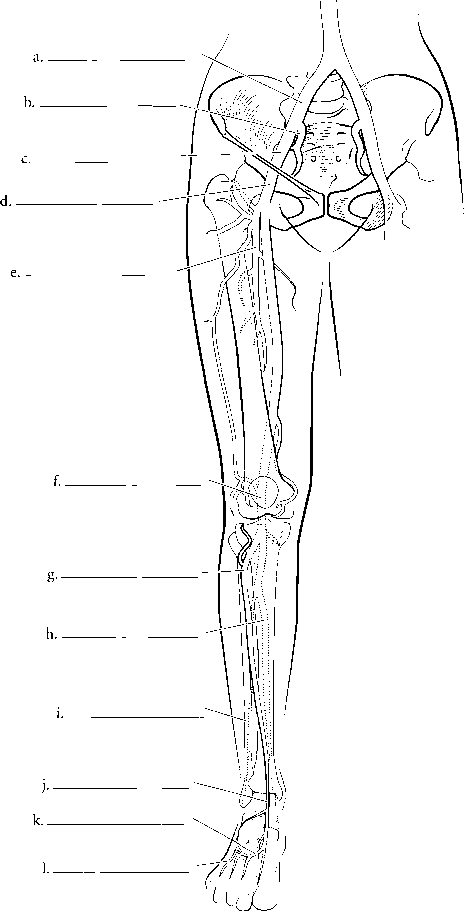 Lower Limbs Label