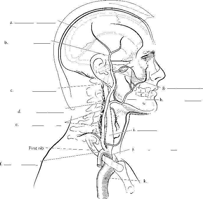 Internal And External Jugular Vein