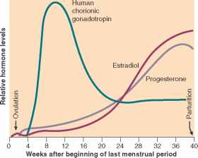 Hormone Levels After Labour