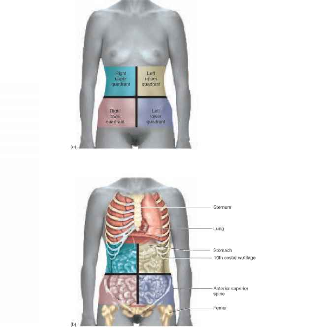 Abdomen Sites: RR School Of Nursing