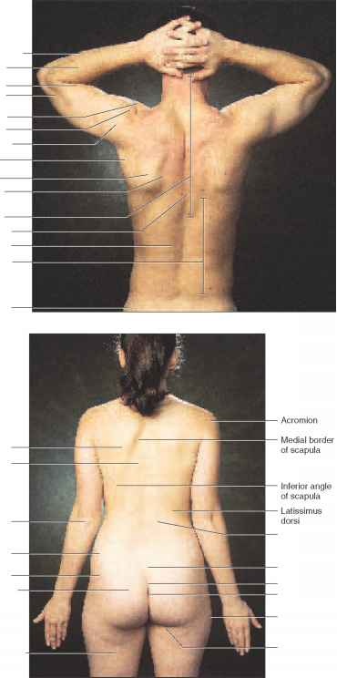Sacral Dimple In Adults - #traffic-club